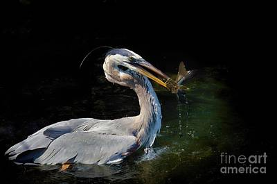 Photograph - First Catch Of The Day by Pamela Blizzard
