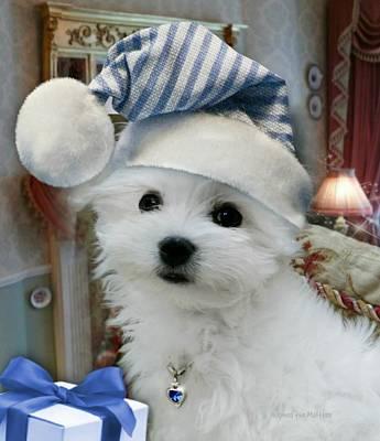 Maltese Dog Christmas Cards Wall Art - Photograph - First Christmas by Morag Bates