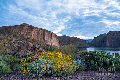 Photograph - First Day Of Spring - Canyon Lake by Leo Bounds