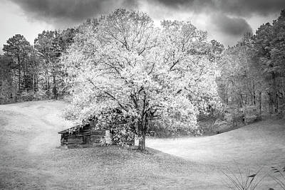 Photograph - First Day Of Winter by Debra and Dave Vanderlaan