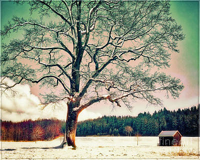 Photograph - First Day Of Winter by Edmund Nagele