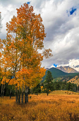 Photograph - First Fall Colors In Rocky Mountain National Park by Dan Sproul