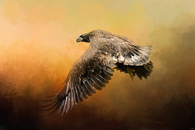 Eagle Photograph - First Flight by Jai Johnson