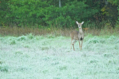 Whitetail Photograph - First Forst by Michael Peychich
