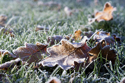 Photograph - First Frost by Helga Novelli