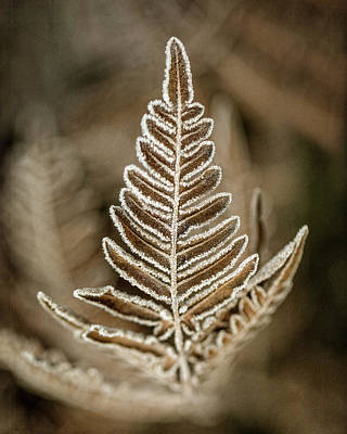 Photograph - First Frost by Jaki Miller