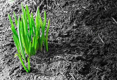 First Green Shoots Of Spring And Dirt Art Print by John Williams