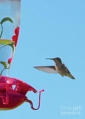 Photograph - First Hummingbird Hello by Carol Groenen