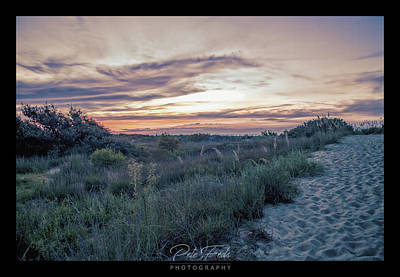 Photograph - First Landing Dunes by Pete Federico