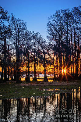 Caddo Lake Photograph - First Light At Caddo Lake by Inge Johnsson