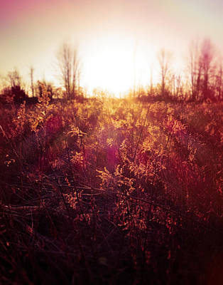 Photograph - First Light Country Field by Dan Sproul