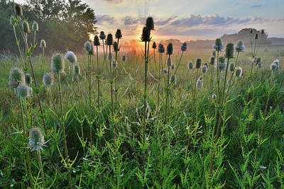 Photograph - First Light In Lakewood Forest Preserve by Ray Mathis