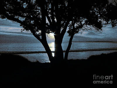 Photograph - First Light by Karen Lewis