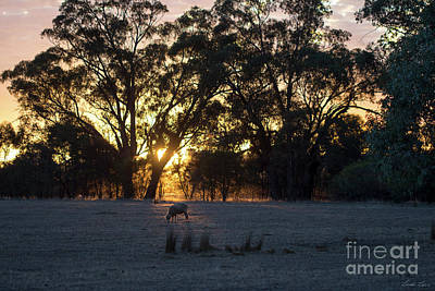 Photograph - First Light by Linda Lees