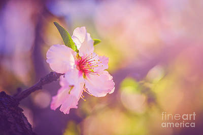 Photograph - First Light Of Spring by Alex Greenshpun