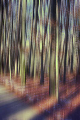 Susann Serfezi Wall Art - Photograph - First Light Of Spring by AugenWerk Susann Serfezi