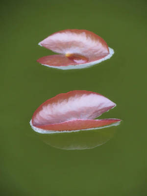 Photograph - First Lily Pads - Brush Strokes by MTBobbins Photography