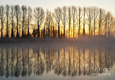 First Misty Light Art Print by Tim Gainey