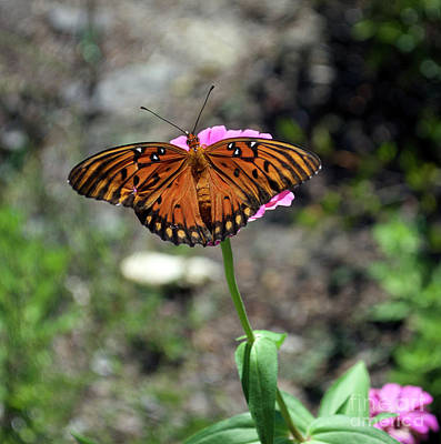Gulf Fritillary Photograph - First Of The Fall by Skip Willits