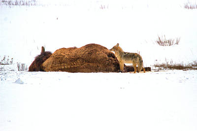 Photograph - First Predator On The Scene by Adam Jewell