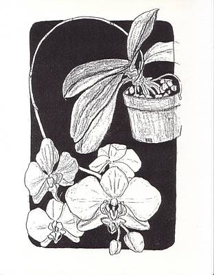 Xerox Art Mixed Media - First Prize Moth Orchid by Vincent Mantia