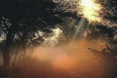 Photograph - First Rays  by Manjot Singh Sachdeva
