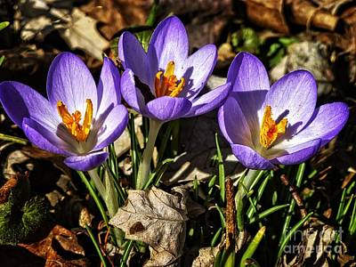 Photograph - First Sign Of Spring by Dee Flouton