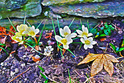 Photograph - First Sign Of Spring by Nina Silver