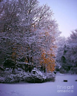 Frank J Casella Royalty-Free and Rights-Managed Images - First Snow After Autumn by Frank J Casella