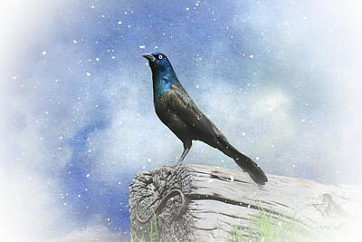Photograph - First Snow And Common Grackle by Andrea Kollo