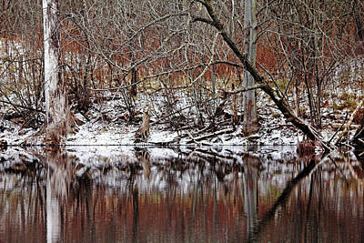 Photograph - First Snow At The Pond by Debbie Oppermann