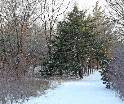 Photograph - First Snow by Betty Morgan