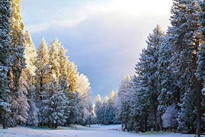 Photograph - First Snow Fall  by Pamela Patch