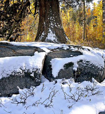 Print featuring the photograph First Snow by Larry Darnell