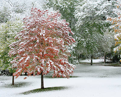 Photograph - First Snow Maple Tree Horizontal by Heidi Hermes