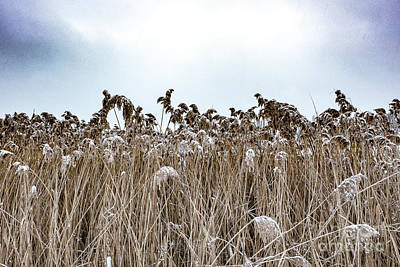 Photograph - First Snow On Roman Reed by Benjamin Wiedmann
