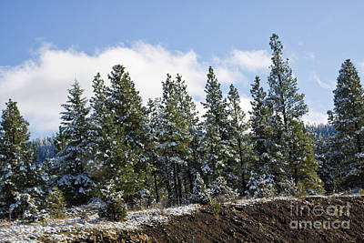 Photograph - First Snow by Tatiana Travelways