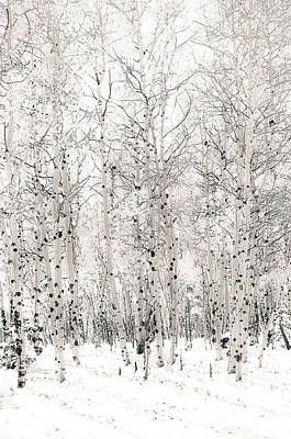 Art Print featuring the photograph First Snow by The Forests Edge Photography - Diane Sandoval