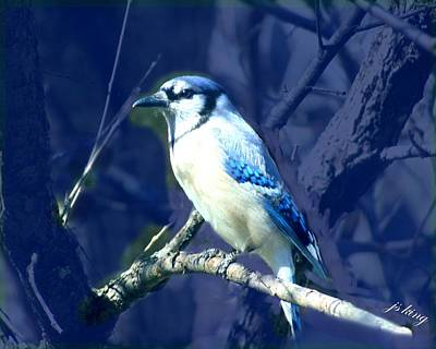 Bluejay Digital Art - First Spring Bluejay by Jacquie King