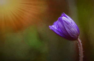 Photograph - First Spring Flower Rays by Mary Jo Allen