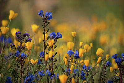 Photograph - First Spring Wildflowers  by Saija Lehtonen