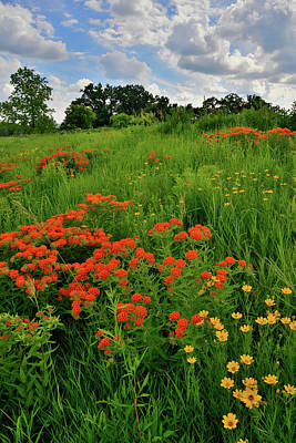 Photograph - First Summer Wildflowers In Glacial Park by Ray Mathis