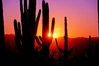 Photograph - First Sunset At Saguaro by John Hoffman