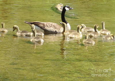 Photograph - First Swim by Kathie Chicoine