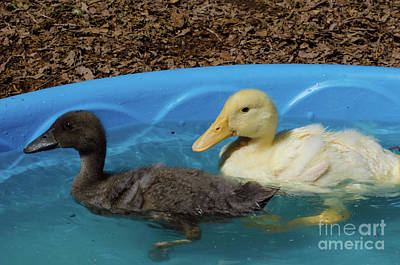 Photograph - First Swimming Lesson by Donna Brown