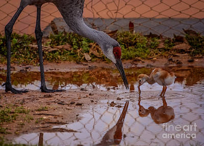 Nature Photograph - First Taste by Zina Stromberg