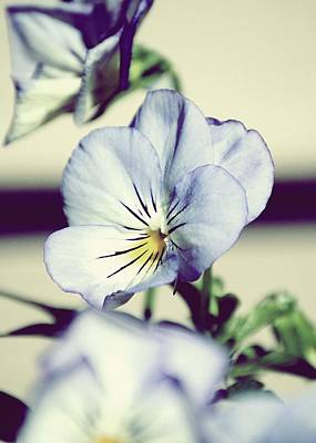 Flower Photograph - First Violets Of Spring by Laura Pineda