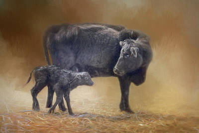 First Walk - Calf And Cow Art Print by Nikolyn McDonald