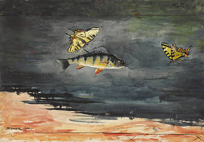 Winslow Homer Drawing - Fish And Butterflies by Winslow Homer