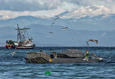 Print featuring the photograph Fish Are Flying by Randy Hall